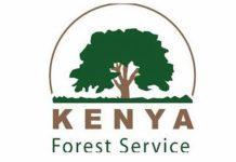 The Kenya Forestry Service (KFS) logo.