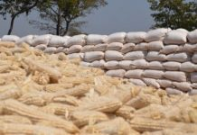 Bags of Maize