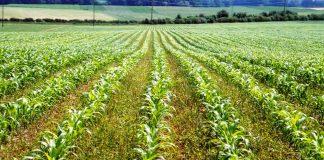 Food/Farming